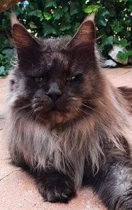 Kikiola Cats Casanova